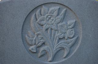 Daffodil engraving